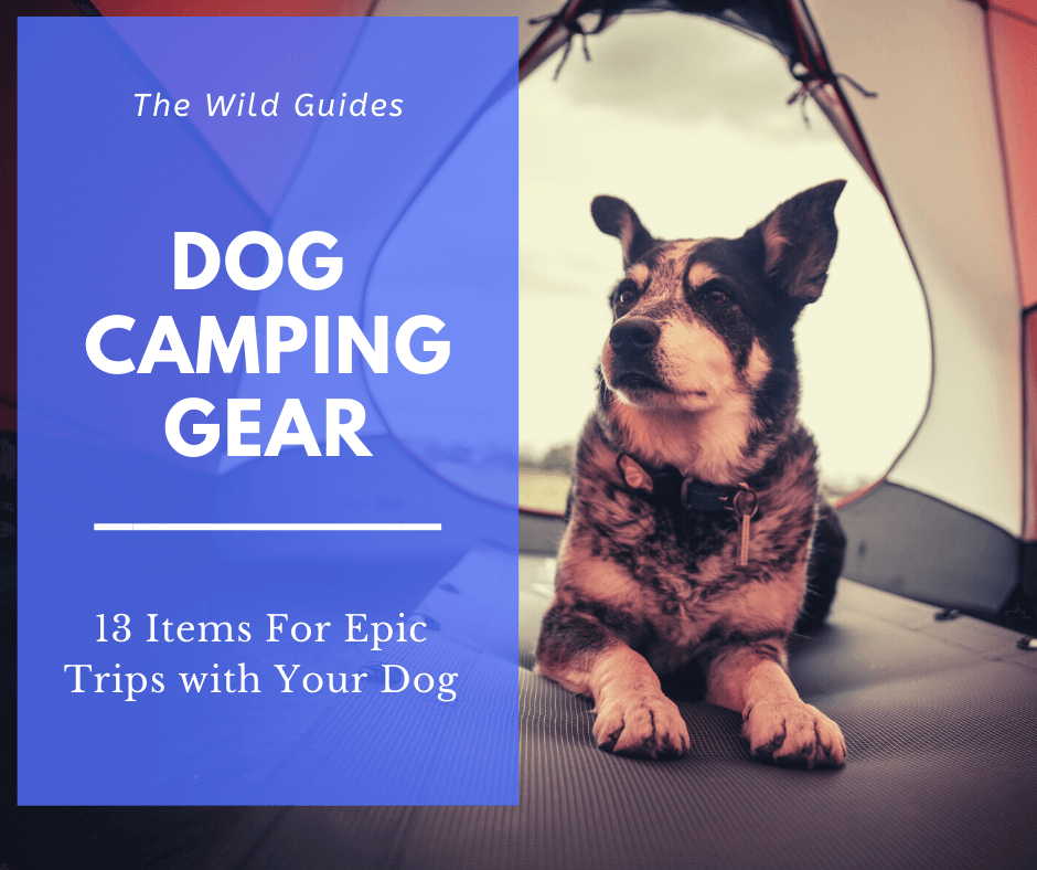 Dog Camping Gear – 13 Items For Epic Trips with Your Dog