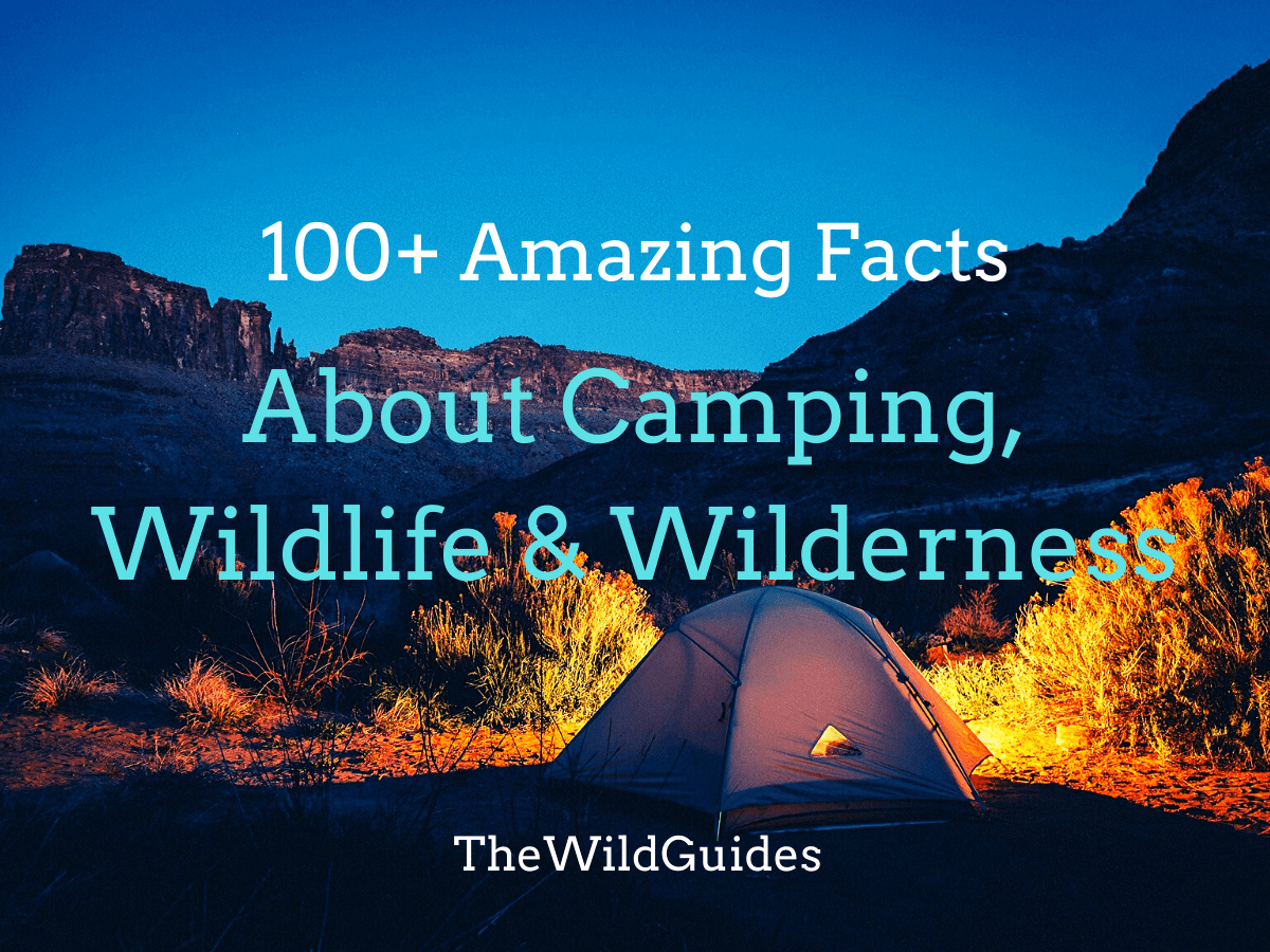 100+ Amazing Facts About Camping, Wildlife & Wilderness