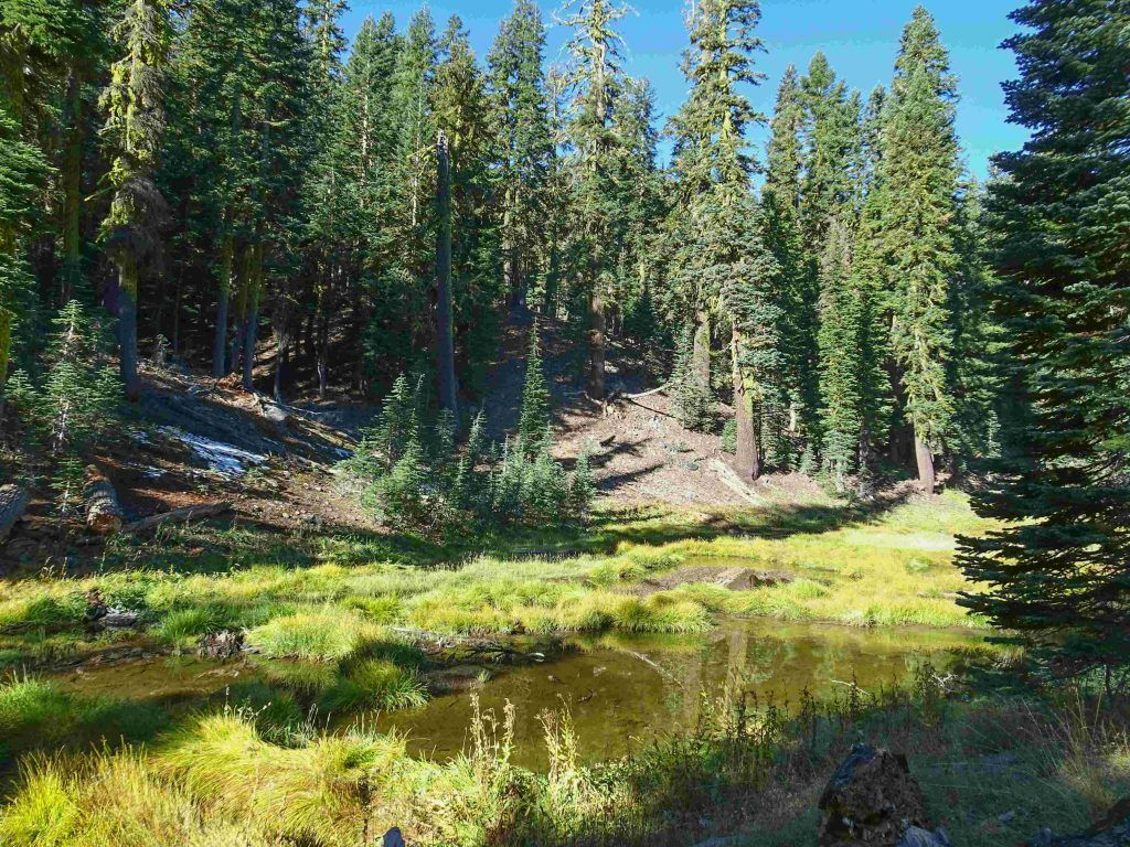 Forests and Meadows in Lassen Park