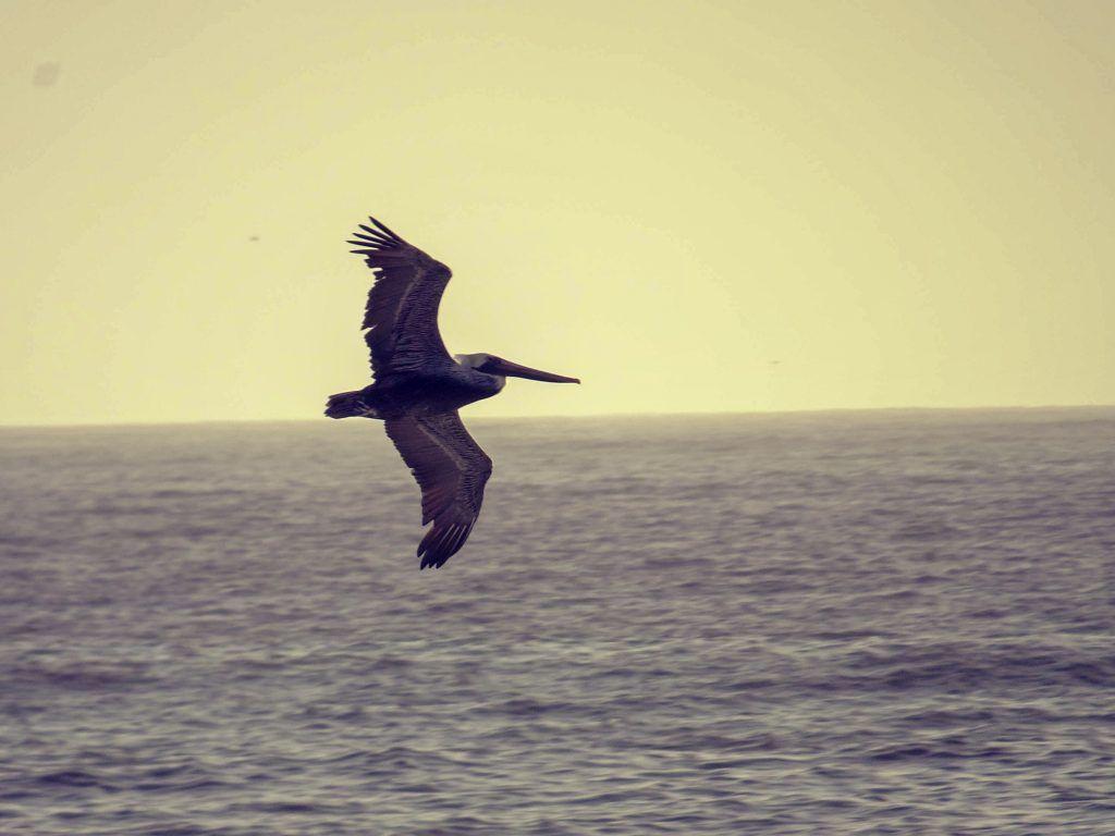 Point Reyes National Seashore-marine birds, Point Reyes