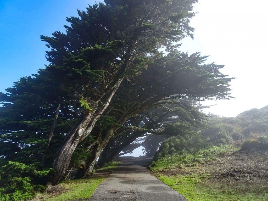 Point Reyes National Seashore-beautiful trees