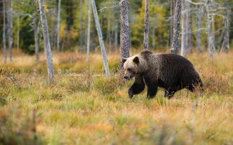 Hiking in the Bear Country: Tips to Stay Safe in the Wild