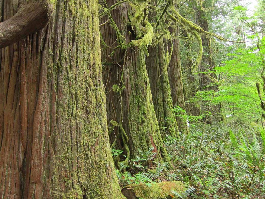 camping in north cascades national park-newhalem trail of the cedars