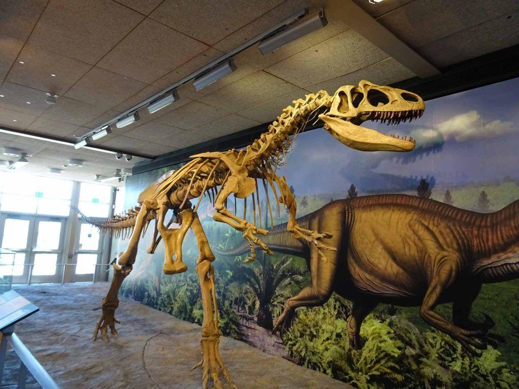stunning dinosaur exposision at the Dinosaur Museum