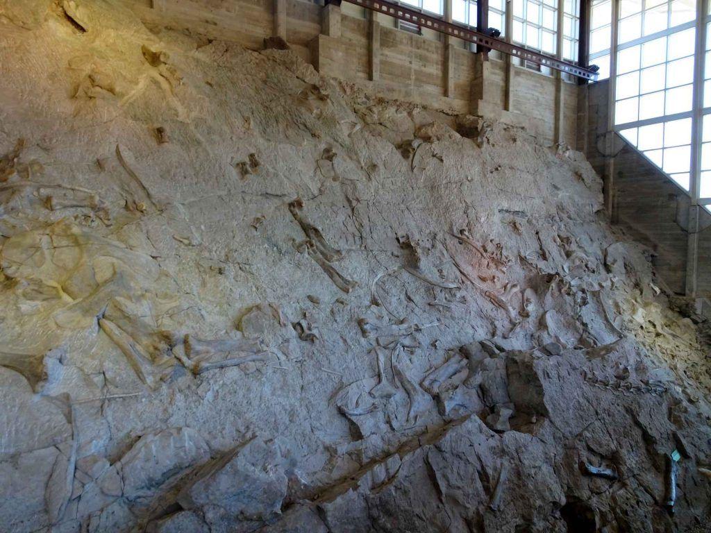 camping in dinosaur national monument-dinosaur bone artifact wall