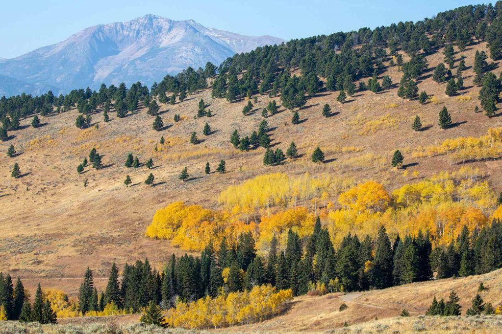 camping in montana: Custer Gallatin National Forest