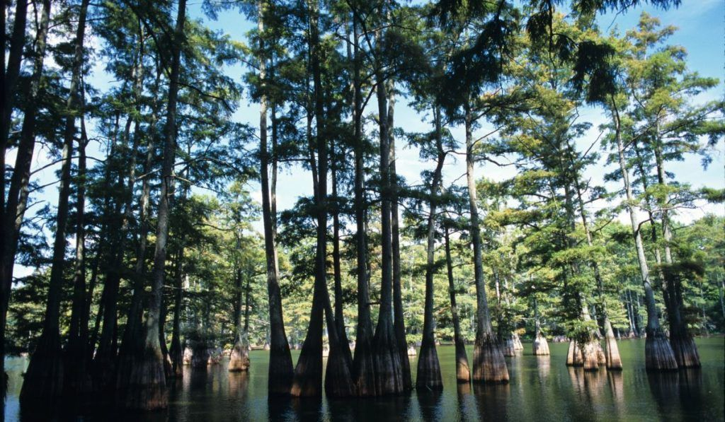 Camping in Texas: Big Thicket National Preserve