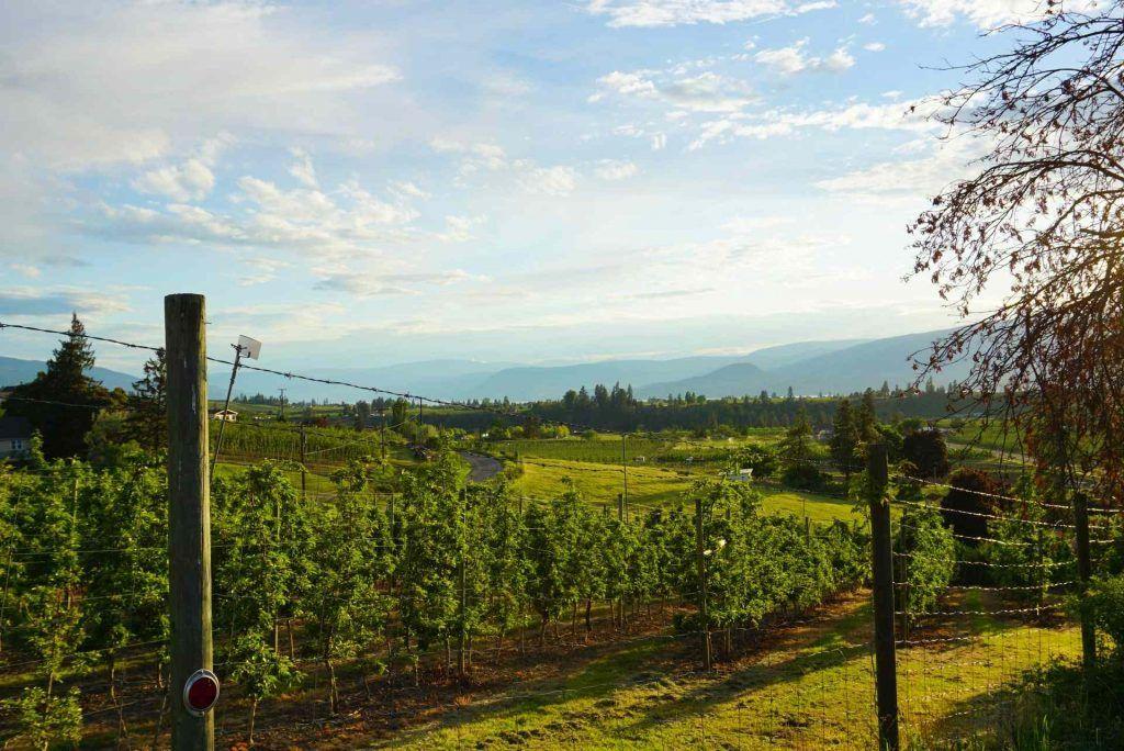 Kelowna RV camping - vineyards