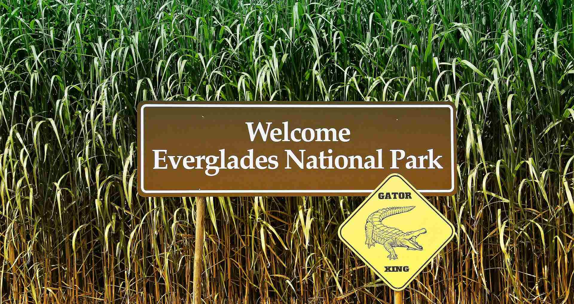 The 8 Best Campgrounds for RV Camping in Everglades National Park